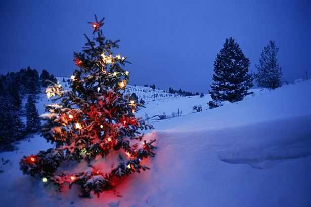 Decorate Christmas Tree in Snow