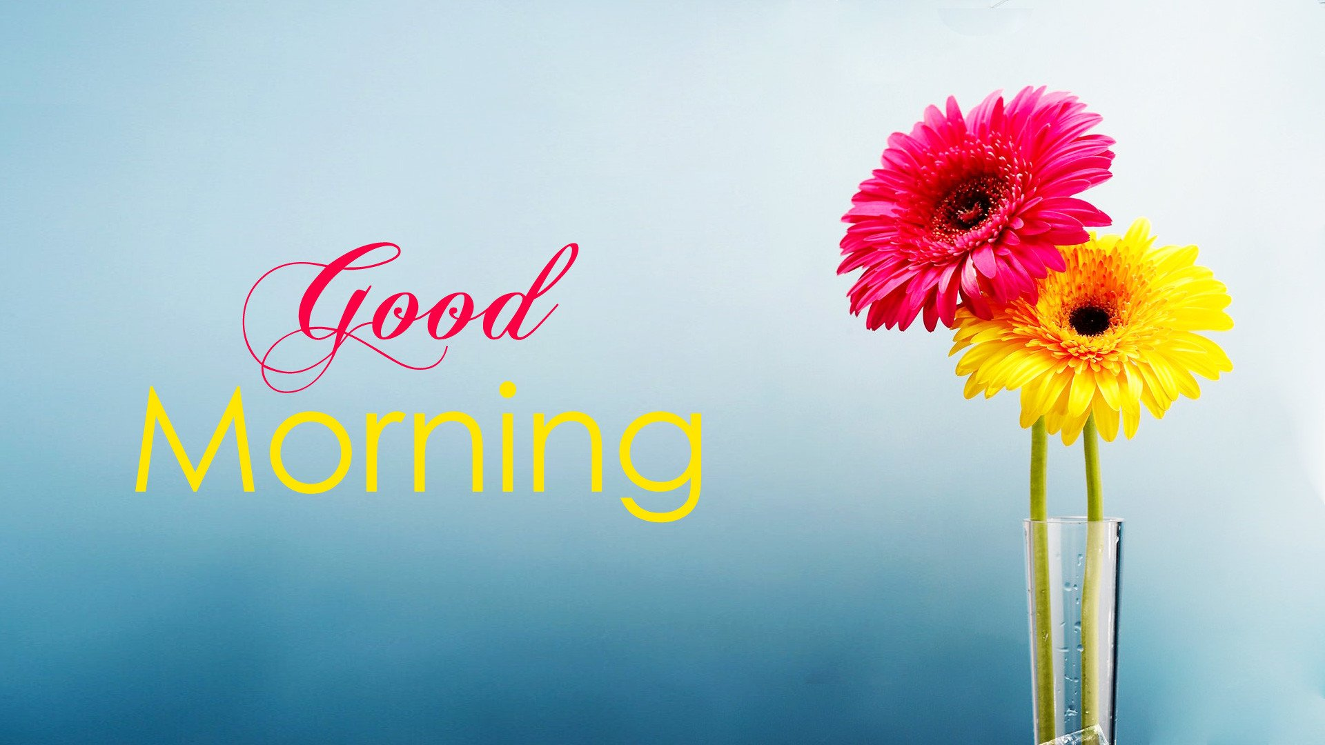 35+ Good Morning Images, Wishes, Pics and Greetings