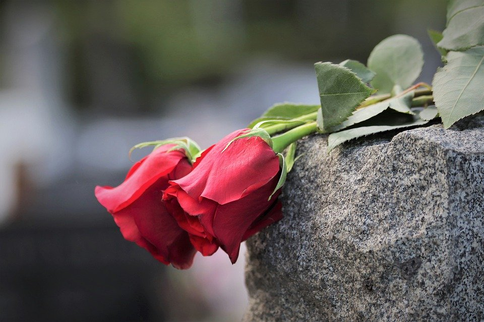 Red Roses For Valentine