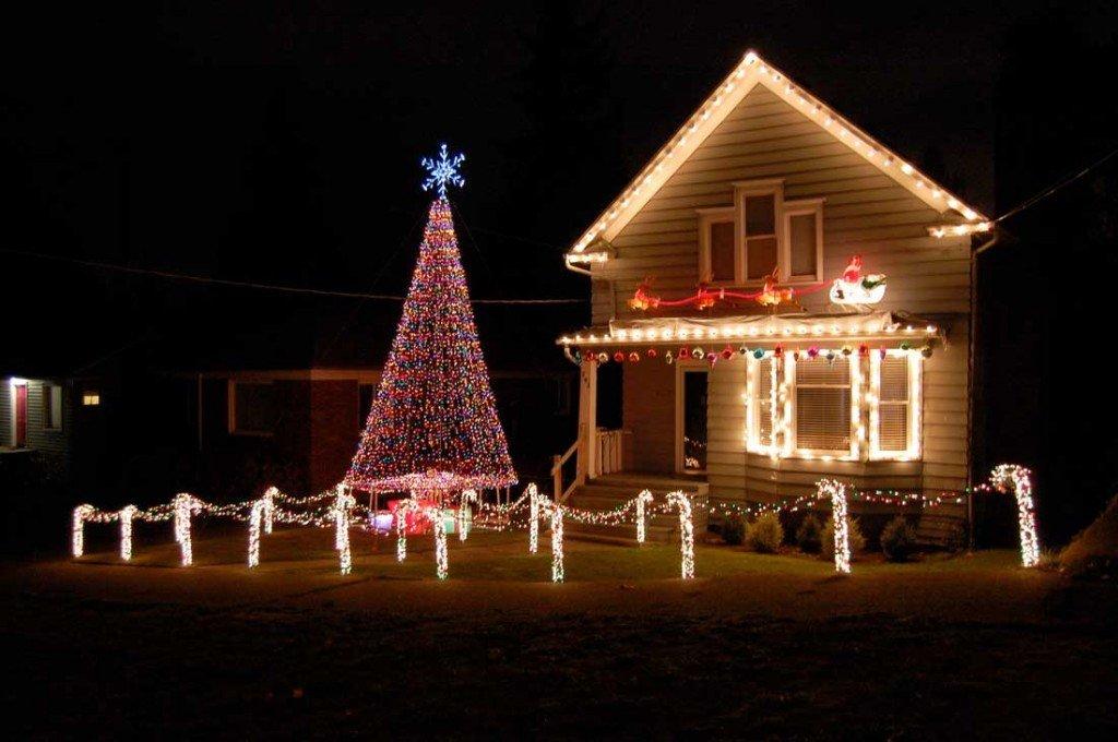 Top Christmas Tree Pics