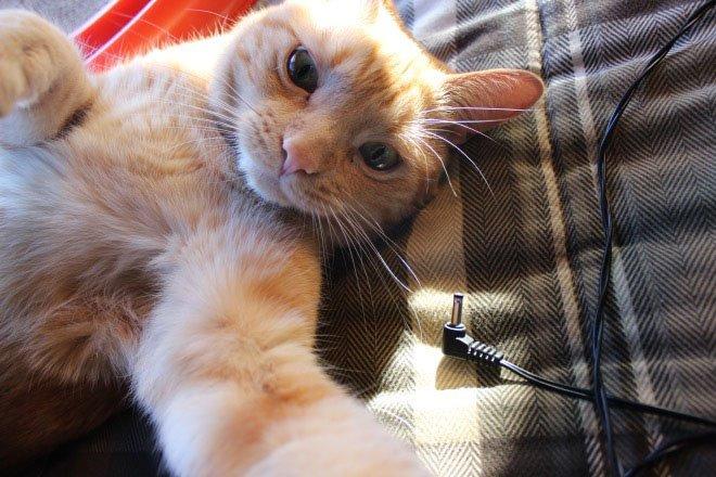 Cats Alone Selfie
