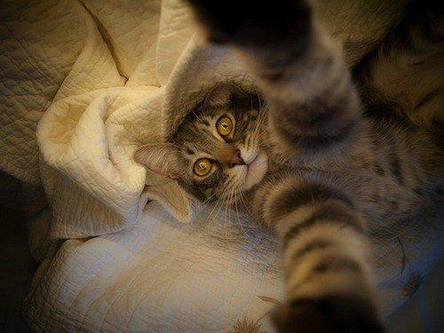 Cats Morning Selfie