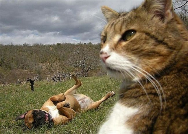 Cats Selfies Funny Image