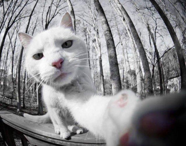 Cats Selfie in Winter