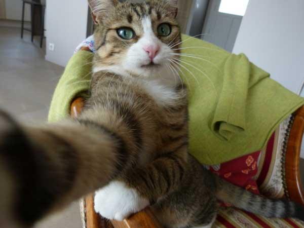 Cats Taking Selfies Meme