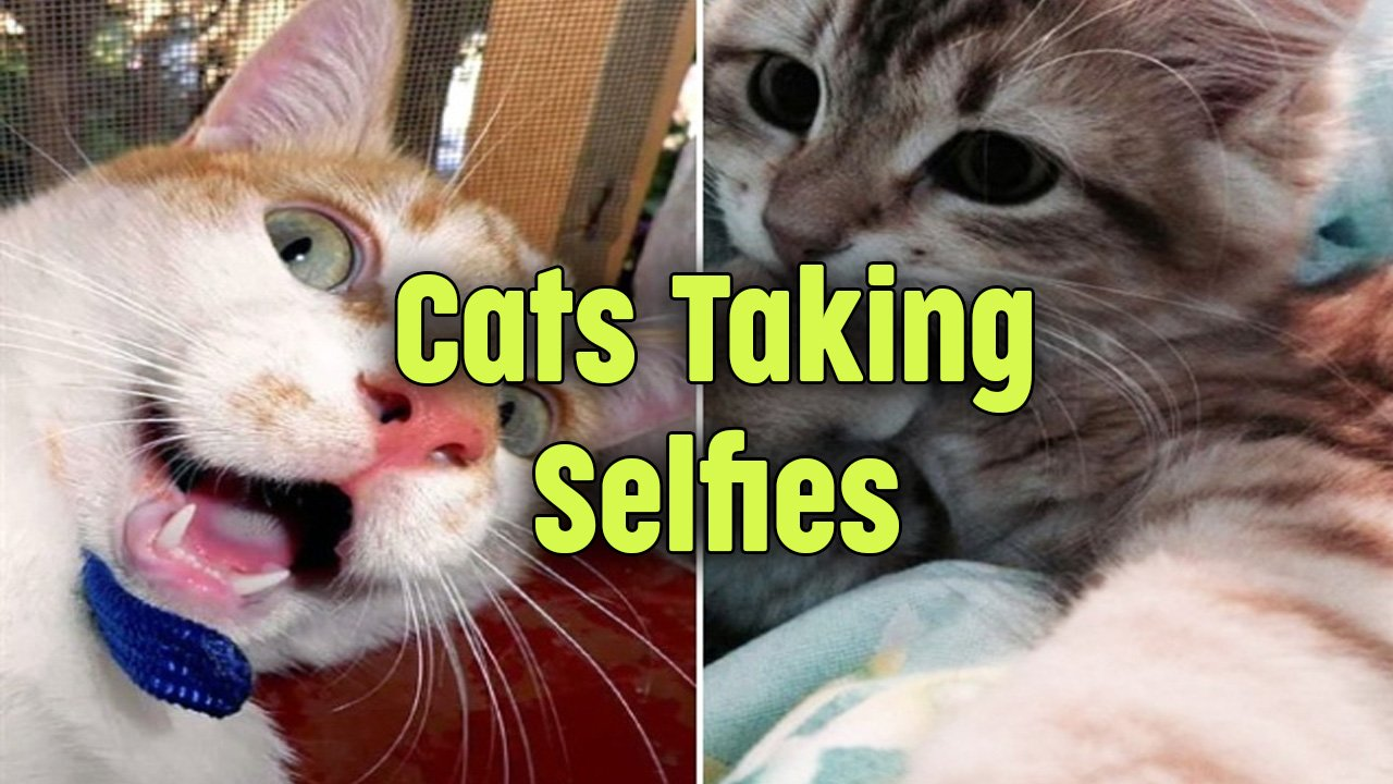 10 Photos of Cats Taking Selfies