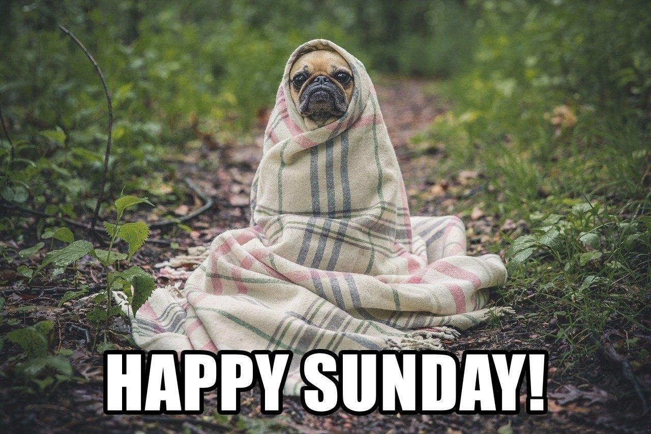Funny Happy Sunday Image