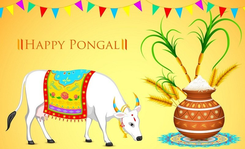 Happy Pongal Festival SMS