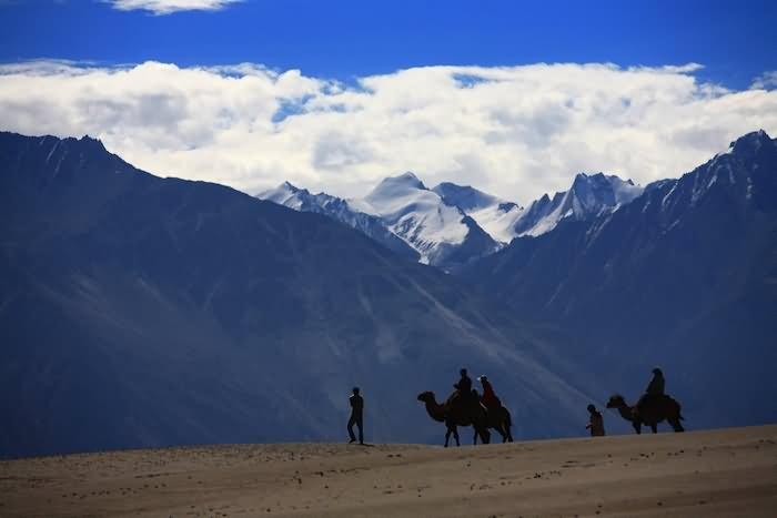Riding On Camels At Nubra Valley