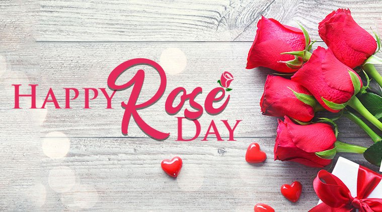 Rose Day Greetings