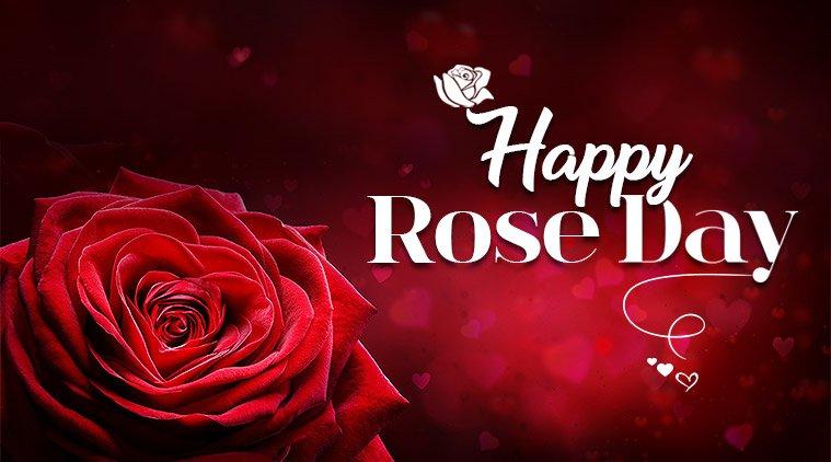 Rose Day Wallpaper