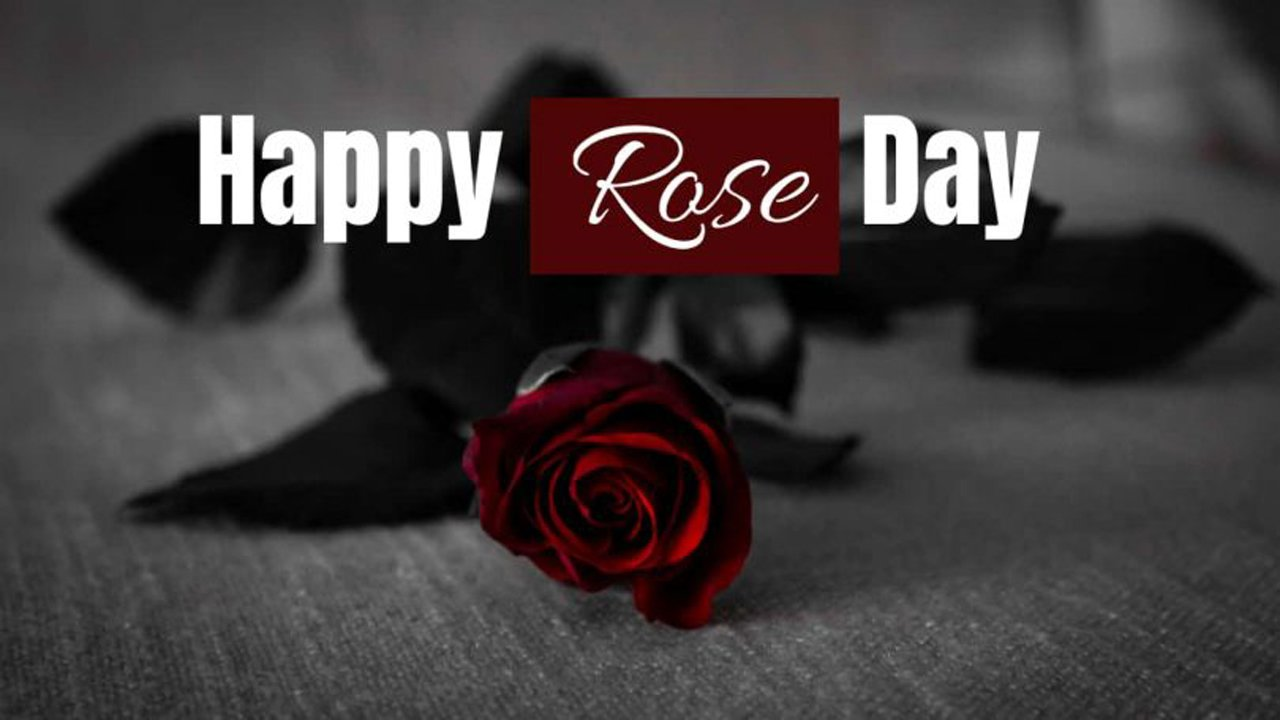 Rose Day Status For Whatsapp in English