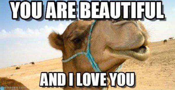 Beautiful And I Love You Funny Camel Meme