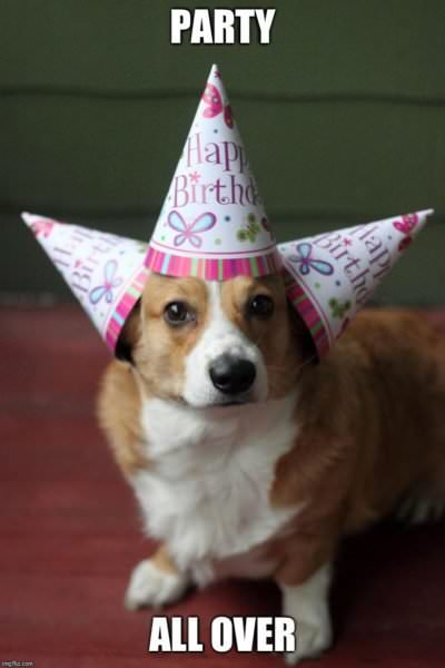 Happy Birthday Meme Dog