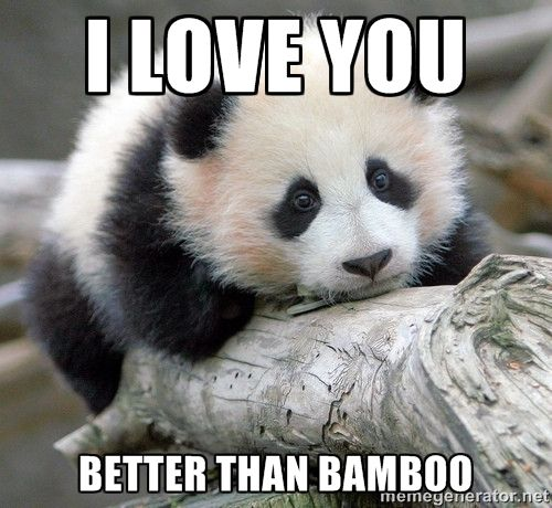 I Love You Better than Bamboo