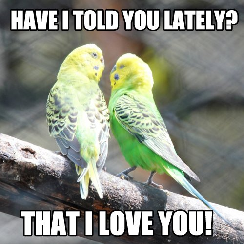 Sweet Love Birds Meme