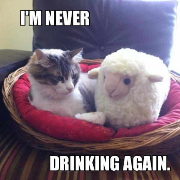 I Am Never Drinking Again Funny Bored Meme Picture