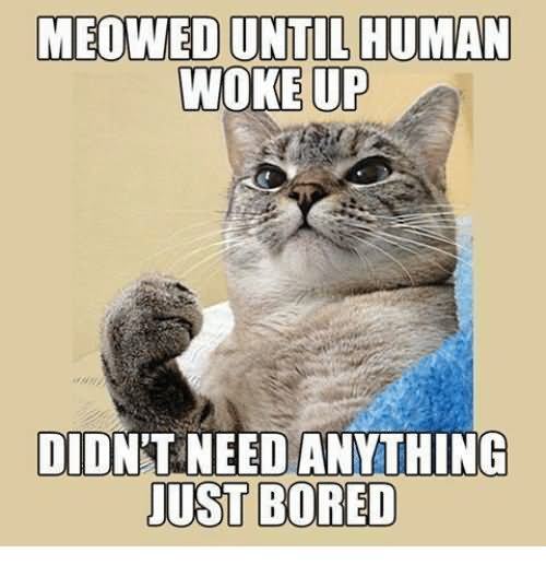 Meowed Until Human Woke Up Didn't Need Anything Just Bored Funny Bored Meme Image