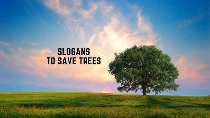Slogans to Save Trees & Forest