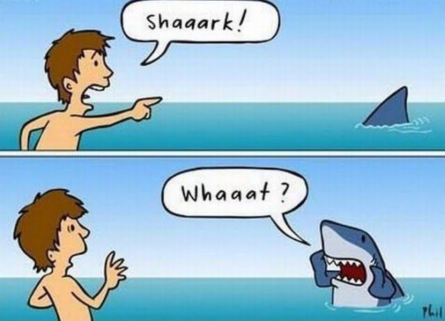 Funny Shaaark!