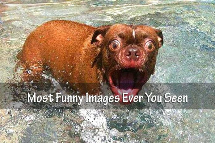 Most Funny Images Ever You Seen