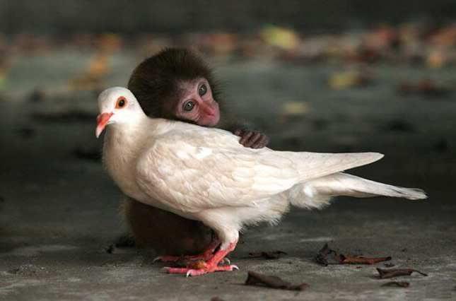 animals couples
