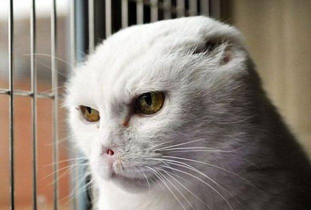 cat thinks Voldemort