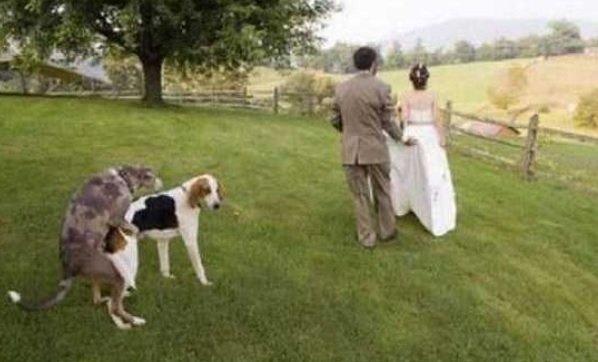 dog on marriage